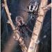 Dictynidae - Photo (c) naturalist_ua, osa oikeuksista pidätetään (CC BY-NC)