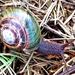 Xanthonychidae - Photo (c) Mike,  זכויות יוצרים חלקיות (CC BY-NC)