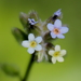 Boraginaceae - Photo (c) Alvin Diamond,  זכויות יוצרים חלקיות (CC BY-NC)