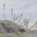 Festuca - Photo (c) cambala, algunos derechos reservados (CC BY-NC)