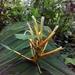 Heliconia longiflora - Photo (c) Marvin López M., algunos derechos reservados (CC BY-NC)