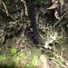 Pseudophasma esmeraldas - Photo (c) Donny Dolman, algunos derechos reservados (CC BY-NC)