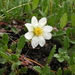 Dryas oxyodonta - Photo (c) Aleksey Vaganov, some rights reserved (CC BY-NC)