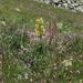 Lilium kesselringianum - Photo (c) Dmitriy Bochkov, some rights reserved (CC BY)