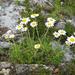 Crisantemos - Photo (c) V.S. Volkotrub, algunos derechos reservados (CC BY-NC)