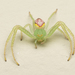 Crab Spiders - Photo (c) Tony Iwane, some rights reserved (CC BY-NC)