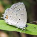 Eastern Tailed-Blue - Photo (c) Cheryl Harleston López Espino, some rights reserved (CC BY-NC-ND)