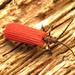 Dictyoptera - Photo (c) Katja Schulz, algunos derechos reservados (CC BY)