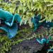 Chlorociboria aeruginascens - Photo (c) Vladimir Bryukhov, algunos derechos reservados (CC BY-NC)