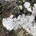 Pyrenodesmia teicholyta - Photo (c) Jason Grant,  זכויות יוצרים חלקיות (CC BY)