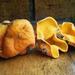 Glaziella aurantiaca - Photo (c) Drew Parker, algunos derechos reservados (CC BY-NC-SA)