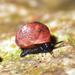 Hendersonia - Photo (c) John Slapcinsky, algunos derechos reservados (CC BY-NC)