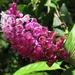 Elleanthus glaucophyllus - Photo (c) Rich Hoyer, algunos derechos reservados (CC BY-NC-SA)