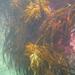 Marginariella boryana - Photo (c) Kate,  זכויות יוצרים חלקיות (CC BY-NC)