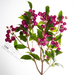 Syzygium paniculatum - Photo (c) Azita Agnew, μερικά δικαιώματα διατηρούνται (CC BY-NC)