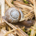 Oregon Forestsnail - Photo (c) John D Reynolds, some rights reserved (CC BY-NC)