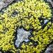 Yellow Map Lichen - Photo (c) Joe Walewski, some rights reserved (CC BY-NC)