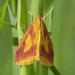 Pyraustinae - Photo (c) Roman Providukhin, some rights reserved (CC BY-NC)