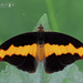 Mariposas Puntas de Fuego - Photo (c) Eduardo Axel Recillas Bautista, algunos derechos reservados (CC BY-NC)