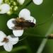 Cauchas rufimitrella - Photo (c) Sandy__R,  זכויות יוצרים חלקיות (CC BY)