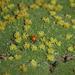 Azorella madreporica - Photo (c) orlandomontes, algunos derechos reservados (CC BY-NC)