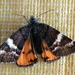 Infant Moth - Photo (c) Doug Macaulay, some rights reserved (CC BY-NC)