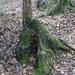 Fomitiporia chilensis - Photo (c) Cristian Riquelme, osa oikeuksista pidätetään (CC BY)