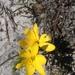 Geissorhiza humilis - Photo (c) Jeremy Gilmore, μερικά δικαιώματα διατηρούνται (CC BY)
