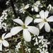 Ricinocarpos pinifolius - Photo (c) eyeweed, algunos derechos reservados (CC BY-NC-ND)