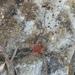 Grassatores - Photo (c) braytonidae, some rights reserved (CC BY-NC)
