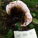 Ganoderma lobatum - Photo (c) A. Rodman, some rights reserved (CC BY-NC)
