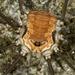 Leiobunum limbatum - Photo (c) Giorgio Bardelli, alguns direitos reservados (CC BY-NC)