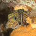 Puffers and Filefishes - Photo (c) Mark Rosenstein, some rights reserved (CC BY-NC-SA)