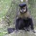 Capuchino Negro - Photo (c) Eden Fontes, algunos derechos reservados (CC BY-NC)