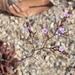 Limonium duriusculum - Photo (c) James Bailey, alguns direitos reservados (CC BY-NC)