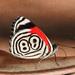 Mariposas Ochenta Y Ocho - Photo (c) João Arthur, algunos derechos reservados (CC BY-NC)