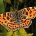 Protea - Photo (c) botanico, algunos derechos reservados (CC BY-NC)