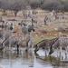 Caballos, Asnos Y Cebras - Photo (c) Nik Borrow, algunos derechos reservados (CC BY-NC)