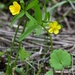 Ranunculus monophyllus - Photo (c) Evgeny Boginsky,  זכויות יוצרים חלקיות (CC BY-NC)