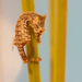 Dwarf Seahorse - Photo (c) Nathan Rupert, some rights reserved (CC BY-NC-ND)