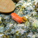 Dwarf Sea Cucumber - Photo (c) ponkyjoe, some rights reserved (CC BY-NC)