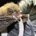 Myotis volans - Photo (c) Corey Lange,  זכויות יוצרים חלקיות (CC BY-NC)