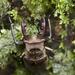 Lucanus maculifemoratus taiwanus - Photo (c) Licheng Shih, alguns direitos reservados (CC BY)