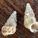 Cochlostoma septemspirale - Photo (c) Julien Renoult, osa oikeuksista pidätetään (CC BY)