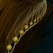 Ochrophyta - Photo (c) Jonathan Lavan, underpressurephotog.com,  זכויות יוצרים חלקיות (CC BY-NC)
