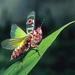 Schizomantodea - Photo (c) osoandino, some rights reserved (CC BY-NC)