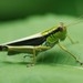 Ognevia sergii - Photo (c) Paul B., algunos derechos reservados (CC BY-NC-ND)
