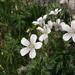 Geranium rivulare - Photo (c) murielbendel, algunos derechos reservados (CC BY-NC), uploaded by Muriel Bendel