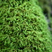True Mosses - Photo (c) Cody Hough, some rights reserved (CC BY-NC-SA)