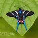 Mariposa Azul de Cola Larga - Photo (c) Eduardo Axel Recillas Bautista, algunos derechos reservados (CC BY-NC)